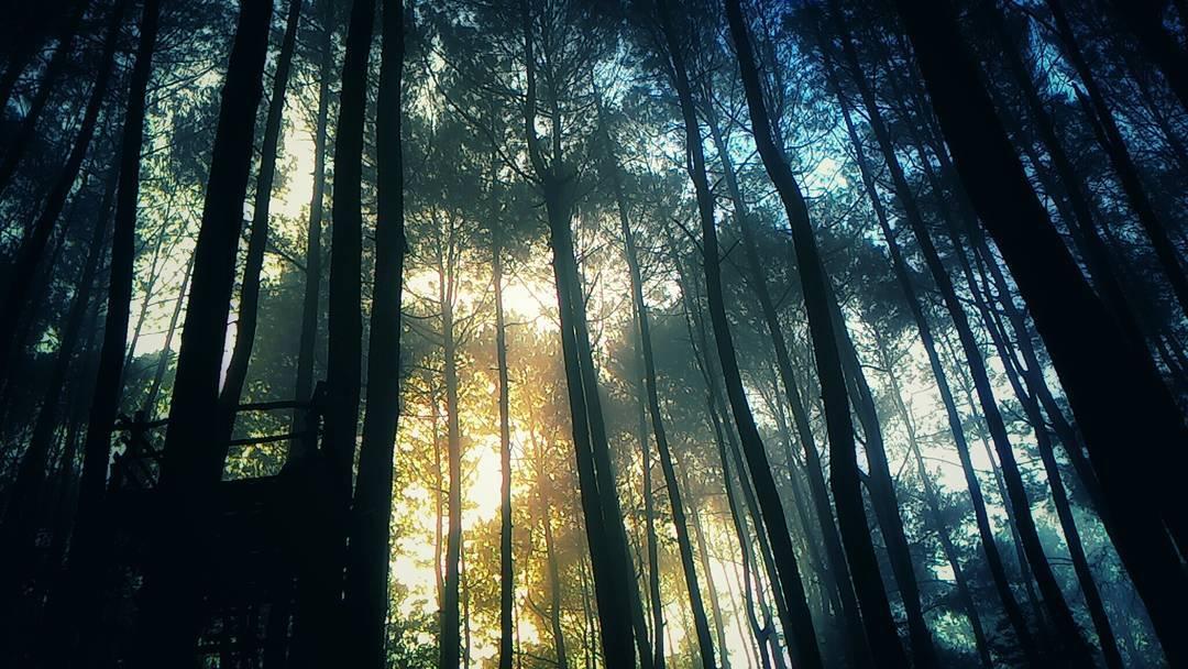 wisata alam hutan pinus mangunan yogyakarta by silviearindy