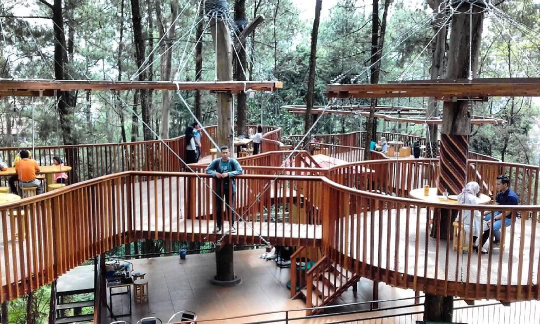 Wisata Alam Kopeng Dan Keunikan Kopeng Treetop
